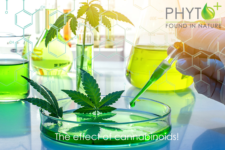 The Effect of Cannabinoids